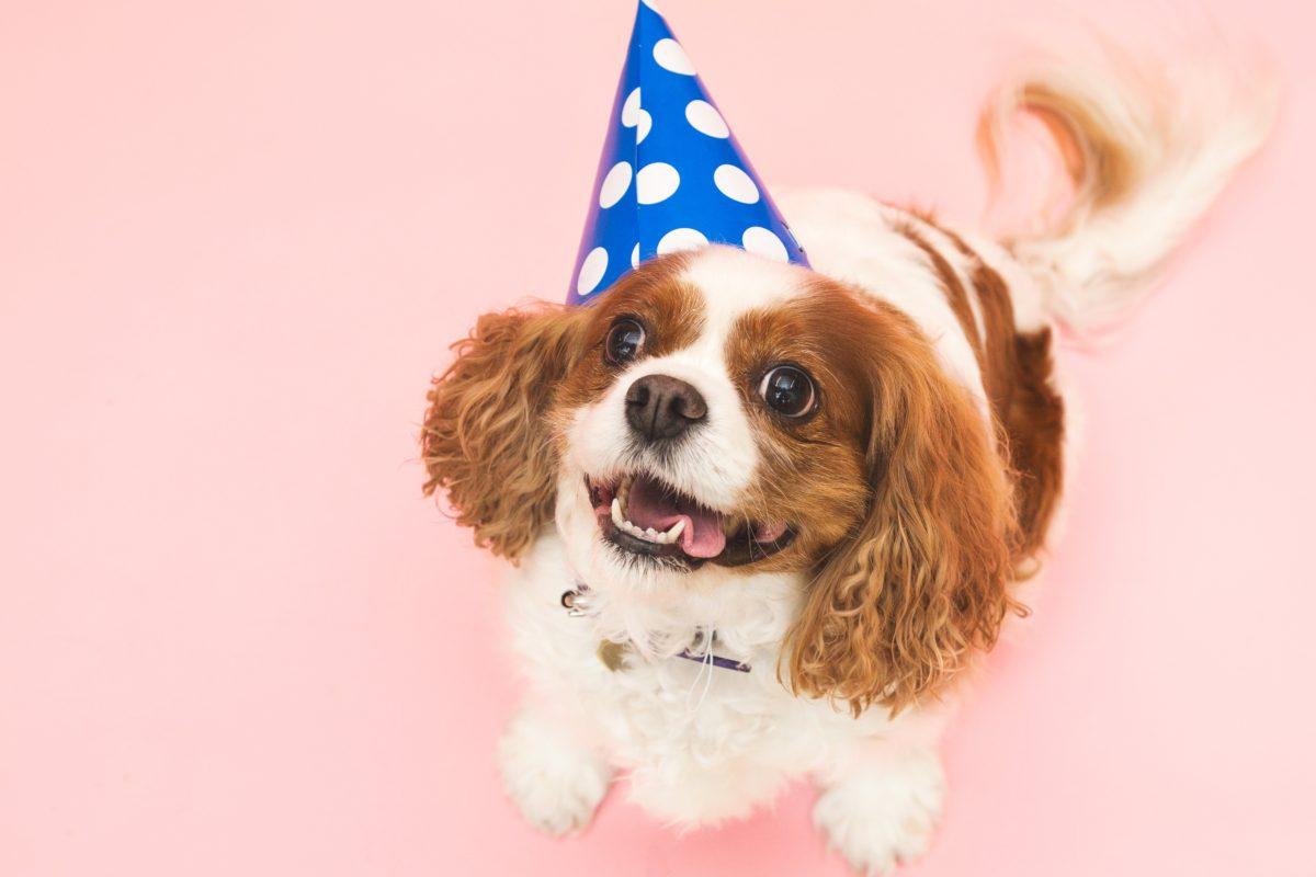 //libertyanimalhospital.com/wp-content/uploads/2016/06/Birthday-Hat-Dog.jpg