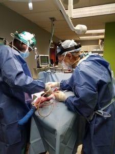 TPLO Surgery