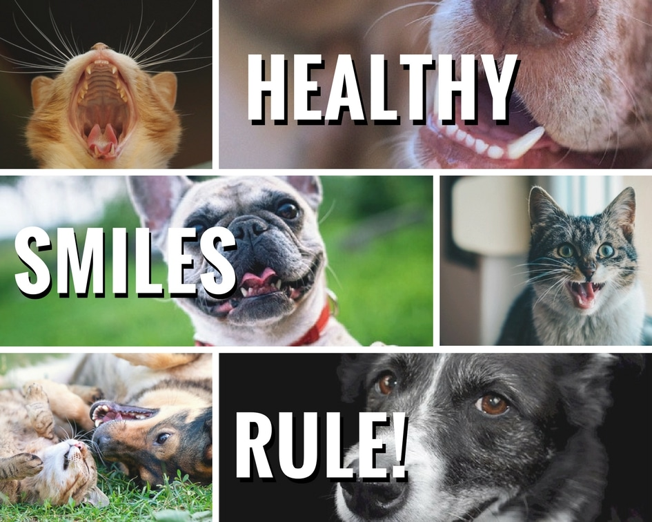 heatlhy_smiles_dog_cat_dental_health