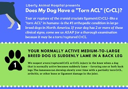 Checklist: Does my dog have a torn ACL or CrCL